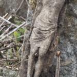 Zahájení čištění a dokumentace náhrobků na hřbitově ve Svatoboru